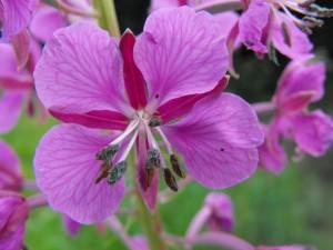 botanicgardensdublin